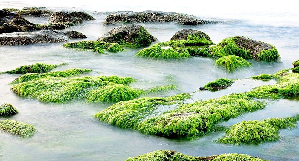 Algues toxiques dans les lacs américains: des scientifiques expliquent le phénomène