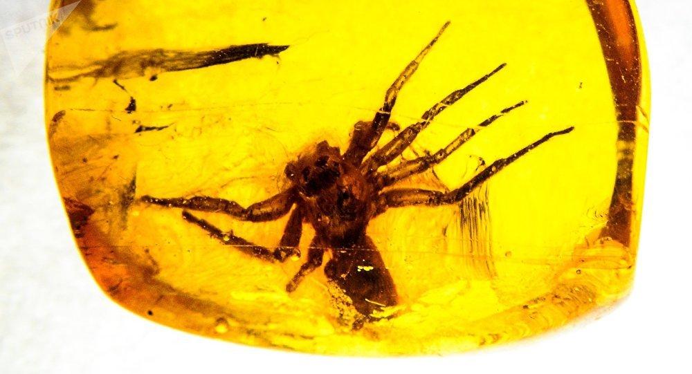 Un insecte dans une pièce d'ambre (photo d'illustration)