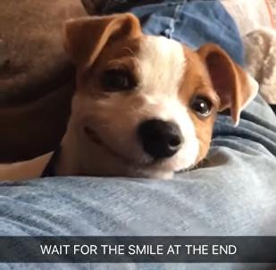 Ce toutou est vraiment heureux et n'a pas pu s'empêcher de sourire