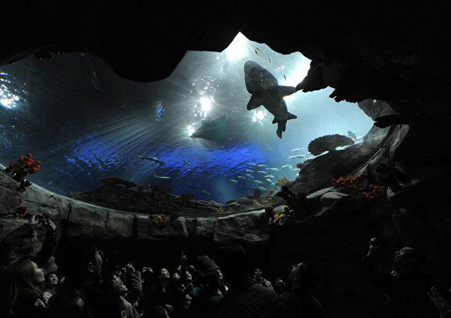 «Ocean Park» à Hong Kong