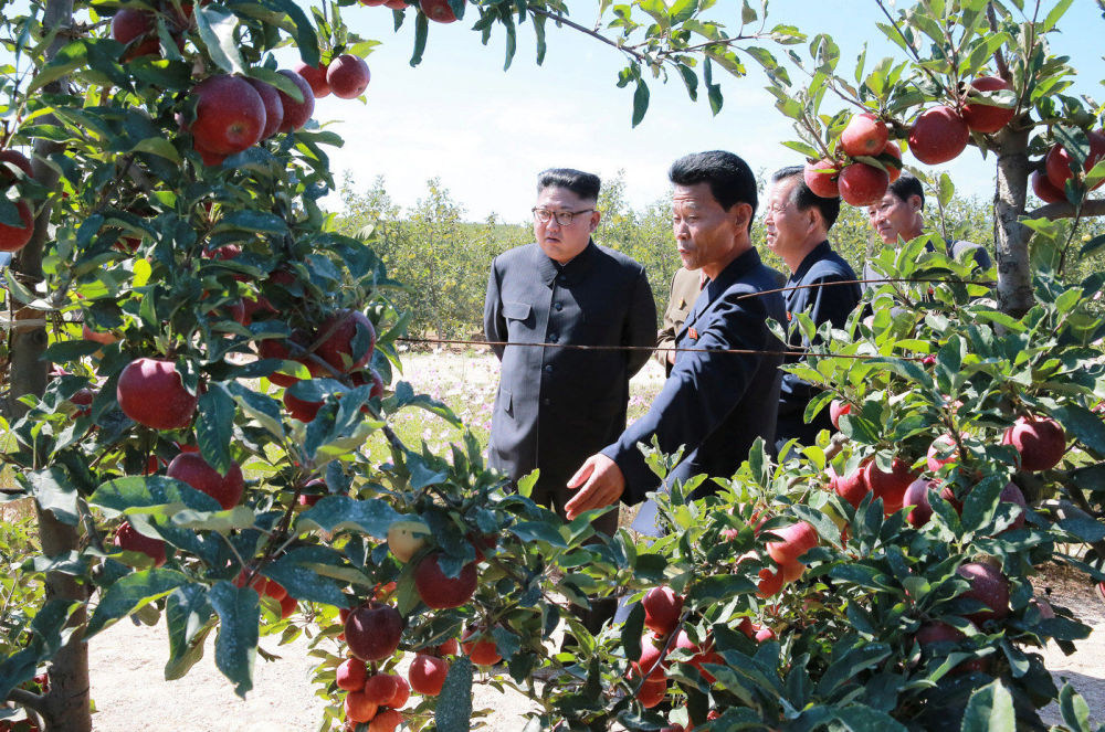 Kim Jong-un visite une exploitation fruitière dans la province du Hwanghae du Sud