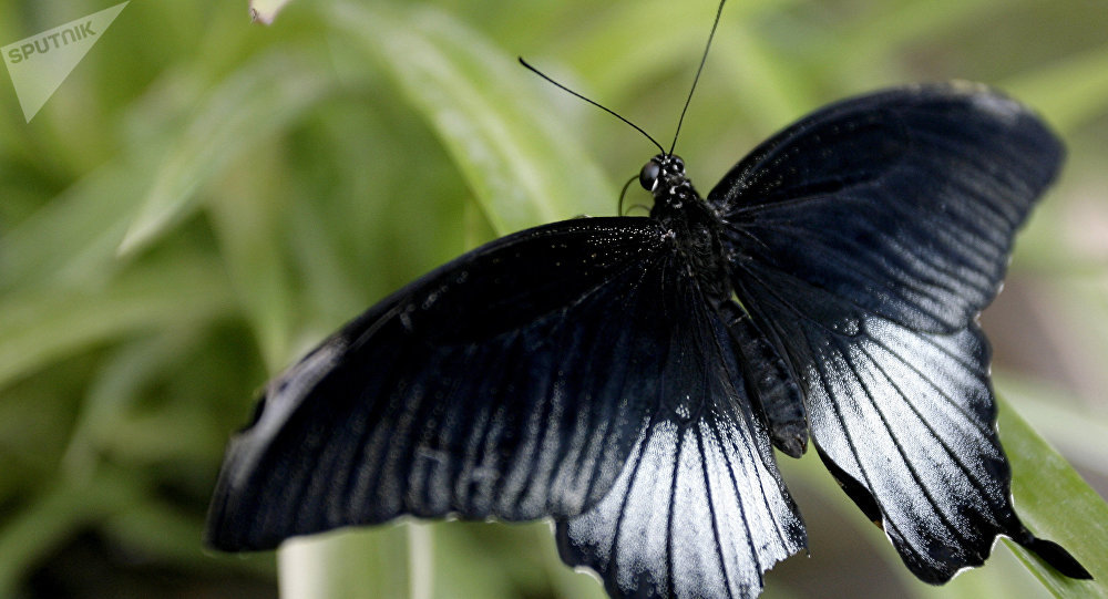 Butterfly Park opens in Rostov-on-Don