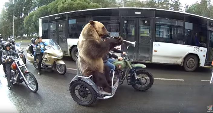 Russian Bear Stuck in Rush Hour