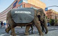Un éléphant dans les rues de Berlin