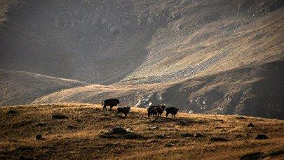 La réserve naturelle et biosphérique du Caucase