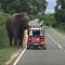 Cet Irlandais regrette d'avoir nourri un éléphant à la main...