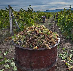 Récoltes en Crimée