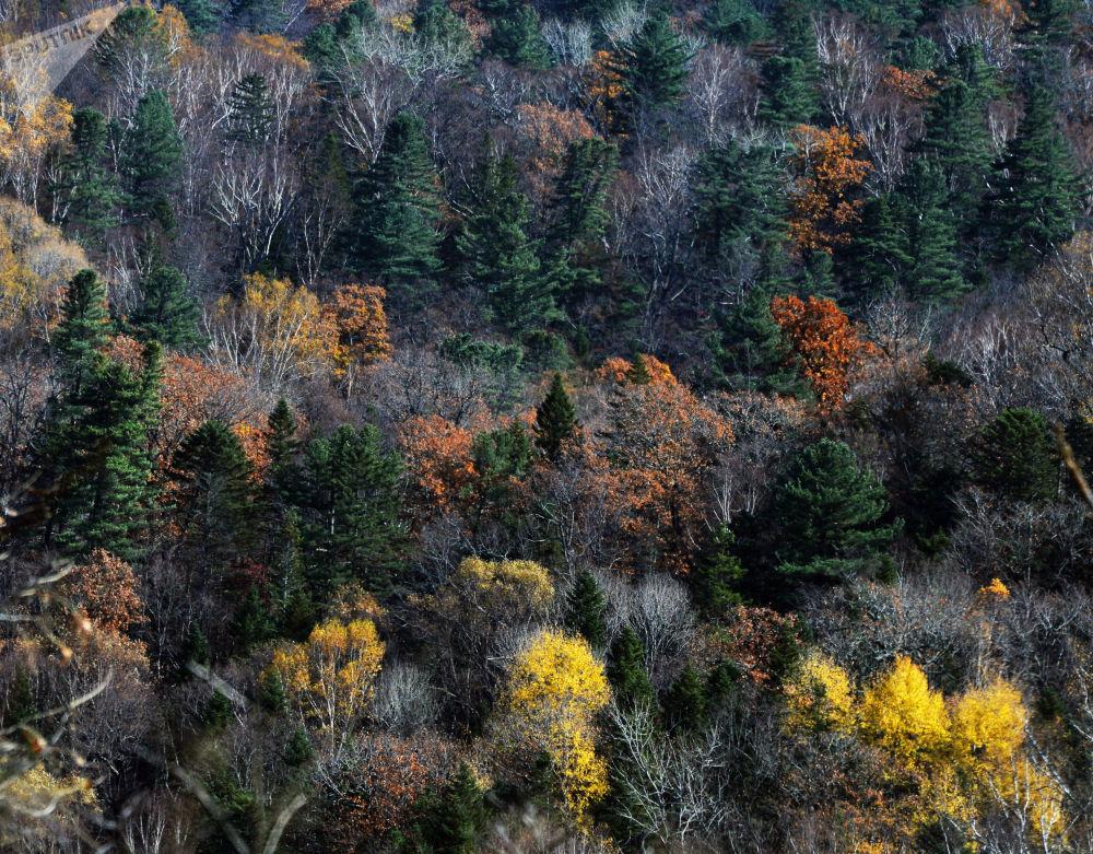 L'automne dans l'Extrême-Orient russe