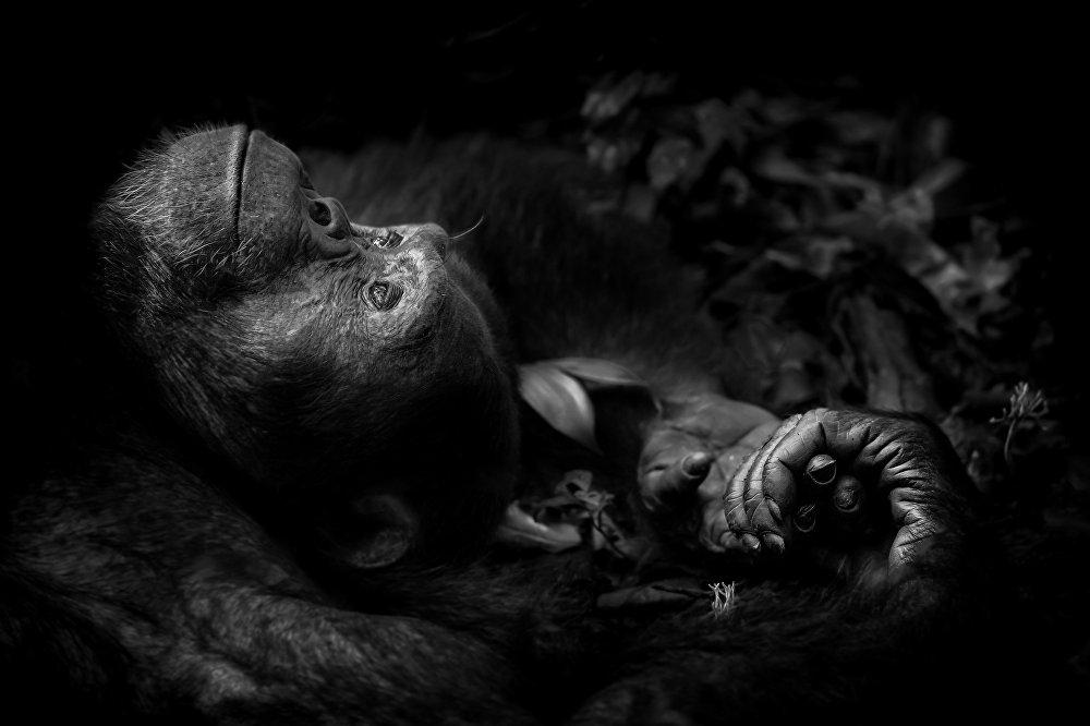 Les lauréats 2017 du concours de photographie Wildlife Photographer of the Year
