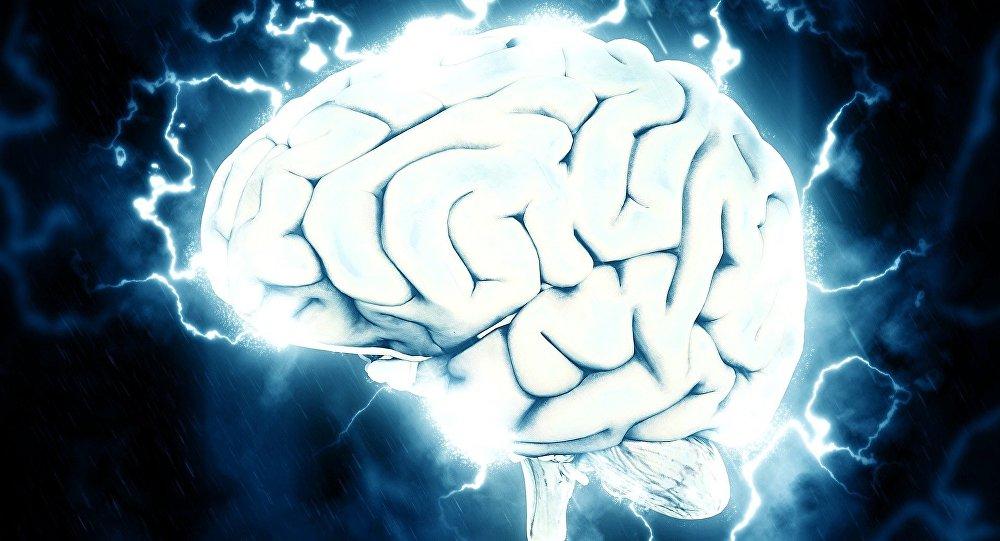 Des cerveaux maintenus en vie pendant 36 heures