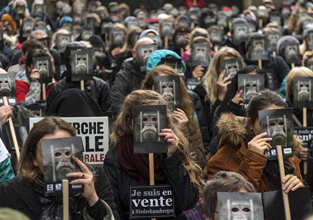 Près de Strasbourg, 350 manifestants pour demander la fermeture d'un centre de primatologie