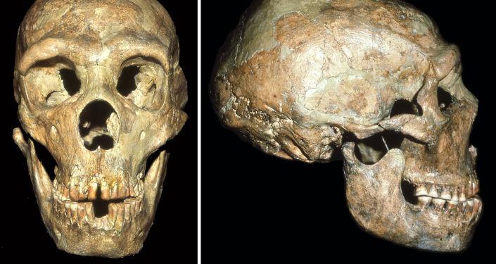 Le crâne de l'homme de Neandertal sourd retrouvé dans la grotte de Shanidar au nord-ouest de l'Irak