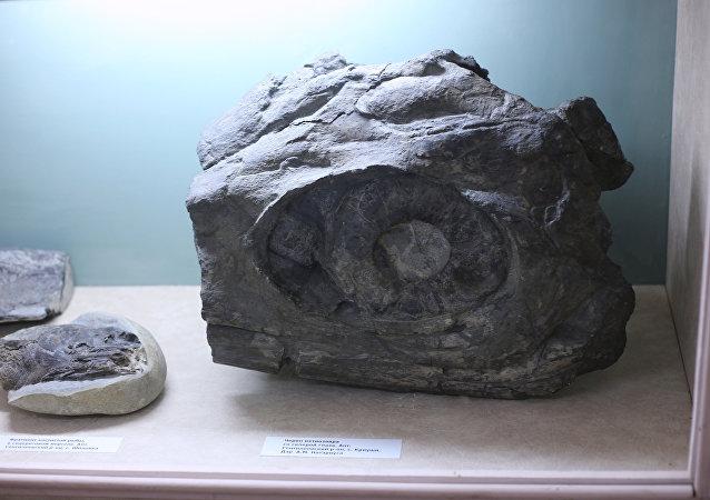 Fragment des restes d'un ichtyosaure