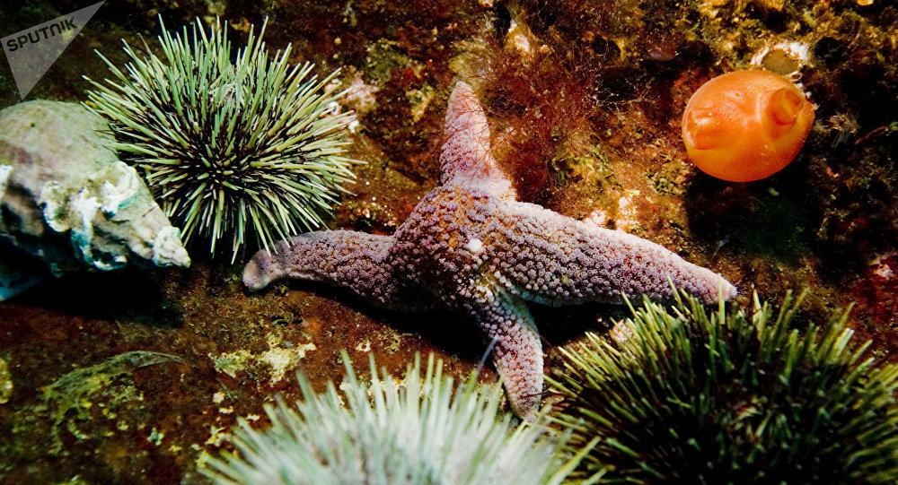 Une étoile de mer