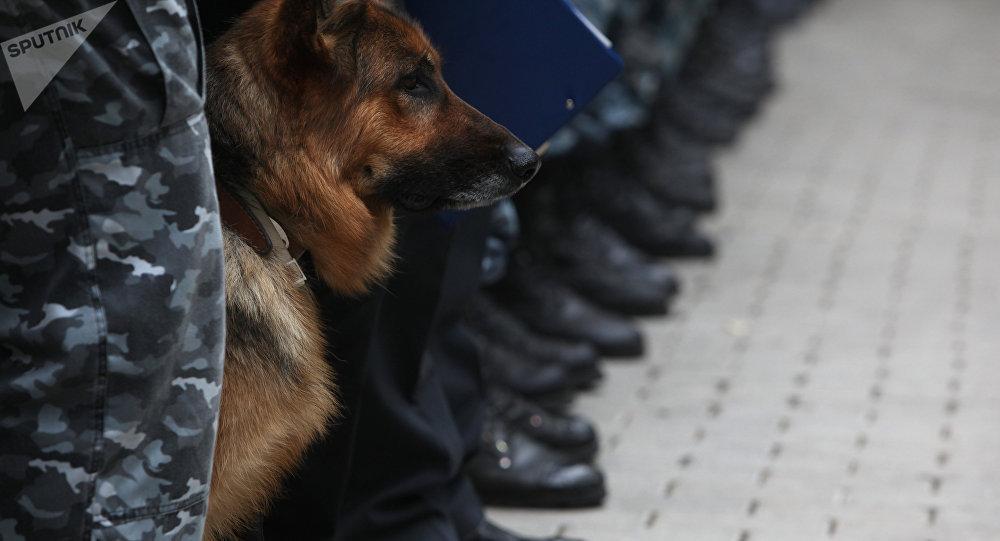 Les chiens des douanes de Moscou font mentir l'adage selon