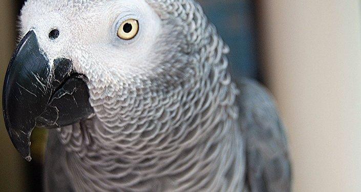 Аu secours! Un perroquet appelant à l'aide alerte des policiers aux USA