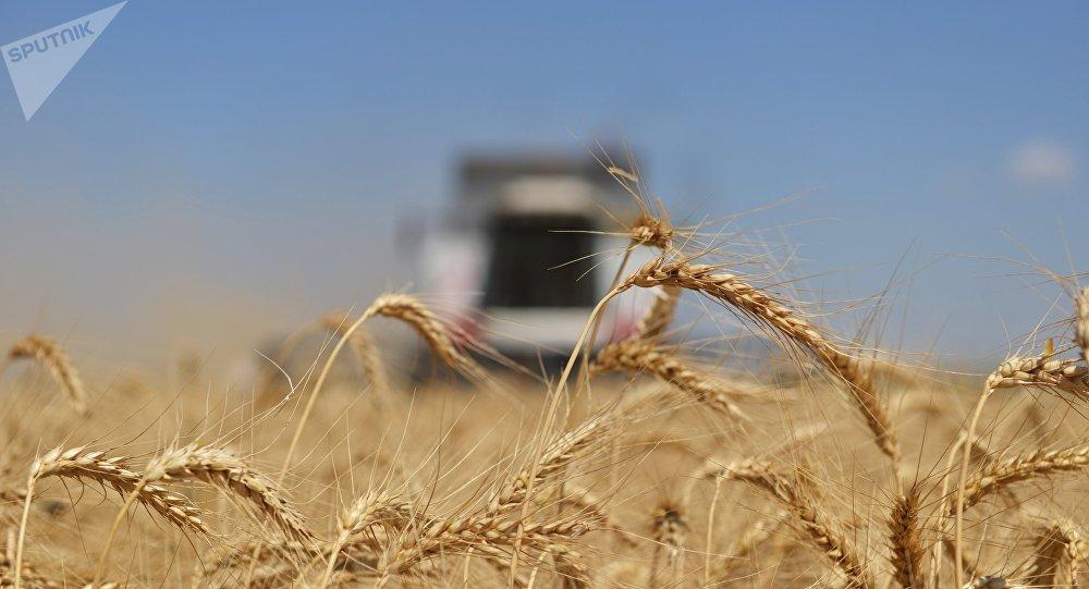 Poutine fait le bilan de la récolte de céréales de cette année en Russie