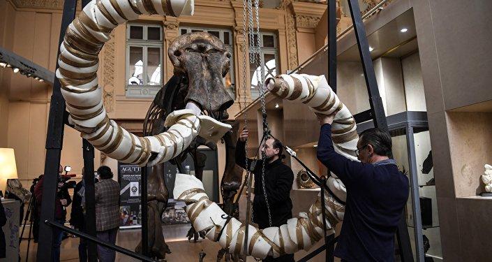 Squelette de mammouth laineux en parfait état cherche acquéreur!