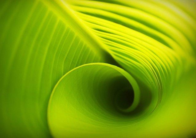 Des physiciens utilisent une simulation quantique pour décrypter les mécanismes de photosynthèse