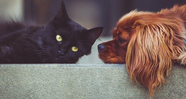 Un chat et un chien