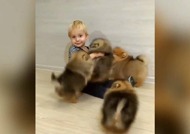 Impossible de dire qui est le plus content: les chiots ou bébé