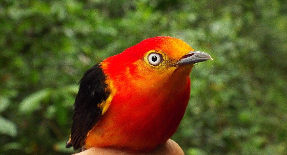 La premi re esp ce hybride d oiseaux trouv e en am rique for Oiseaux du sud de la france
