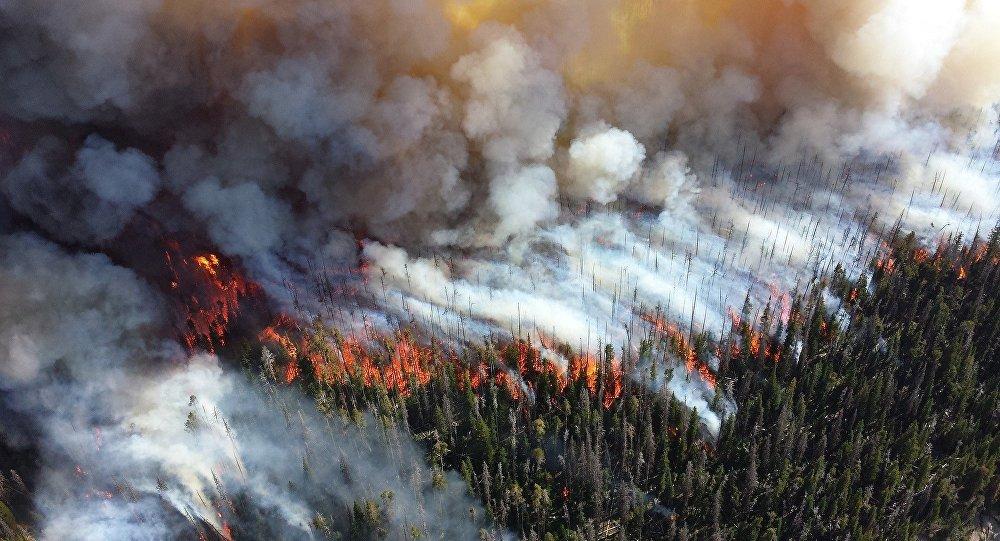 Incendie de forêt
