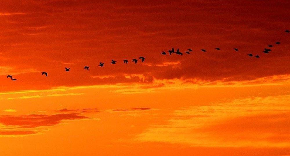 Des oiseaux