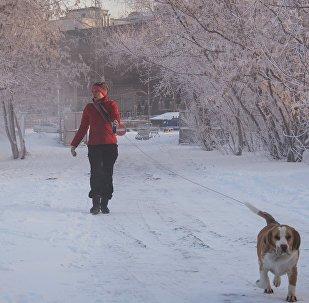 Une promenade en hiver