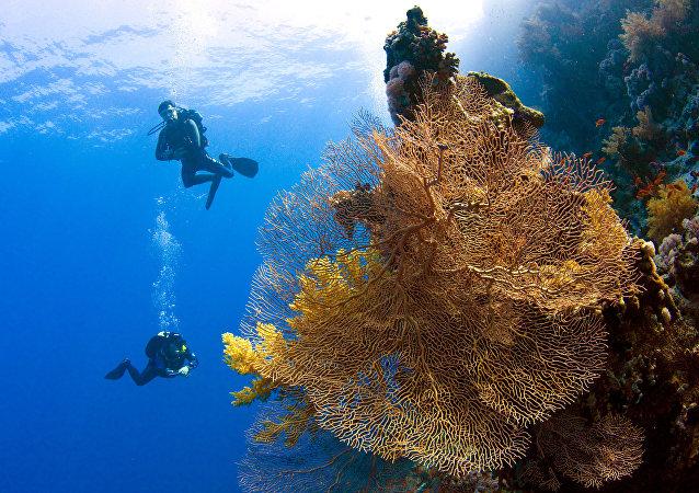 Plongeurs en mer Rouge