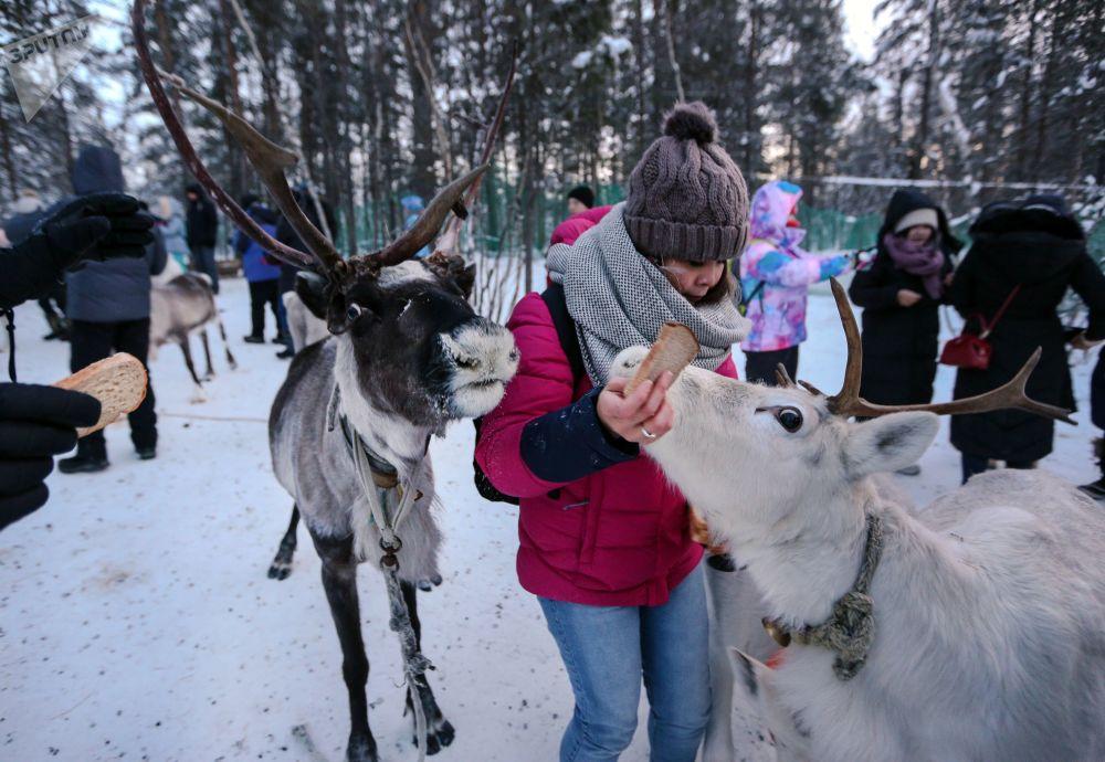 Village sami dans la région de Mourmansk