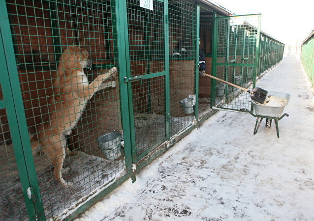 Un refuge animalier