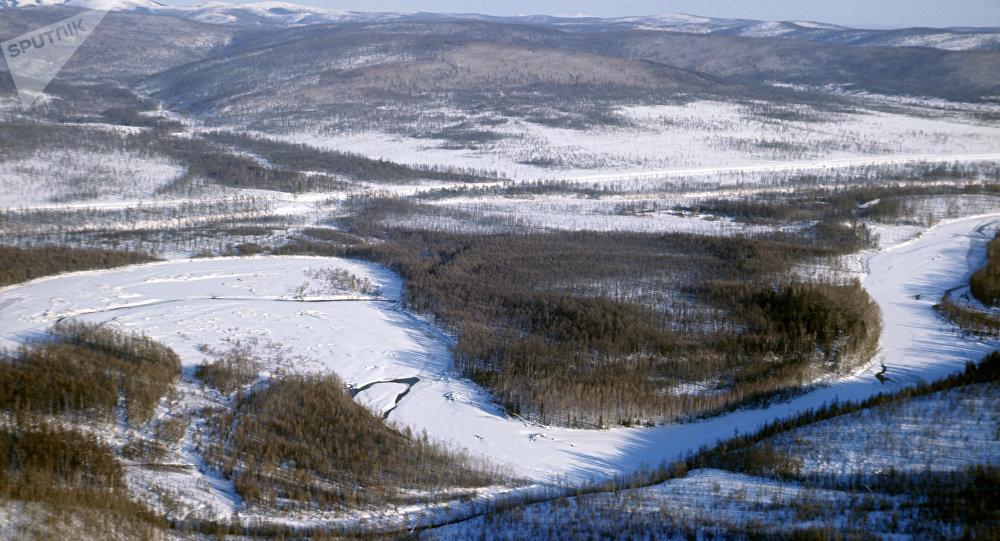Une tête de loup vieille de 40.000 ans découverte en Sibérie, son cerveau est presque intact (images)