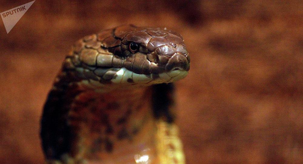 Saurez-vous citer le serpent sur cette photo?