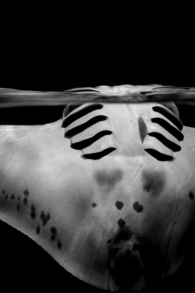 Gagnants du concours de photographie sous-marine Underwater Photographer of the Year 2018
