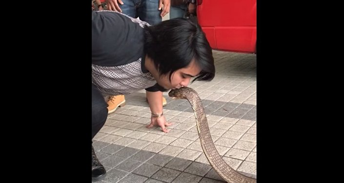 Embrasser un serpent? Pas de problème!