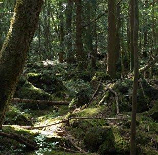 Une forêt, image d'illustration