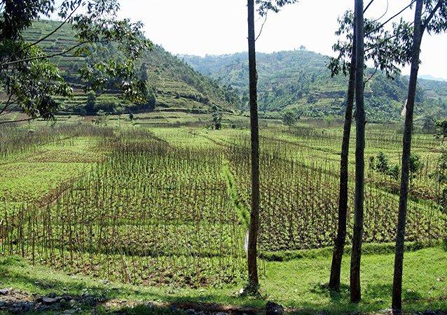 Rwanda (image d'illustration)