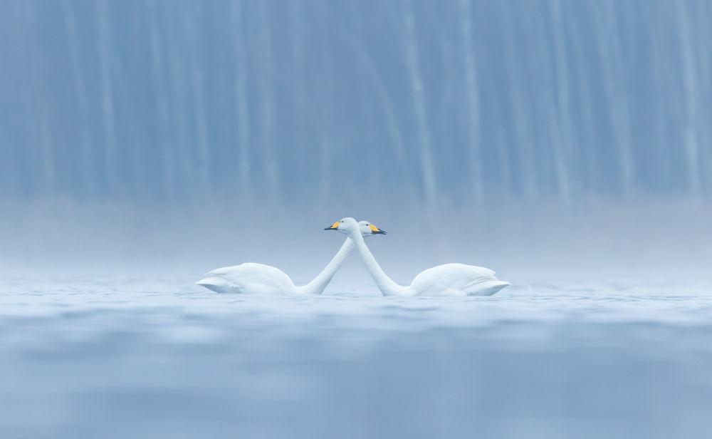 Les plus belles photos d'oiseaux