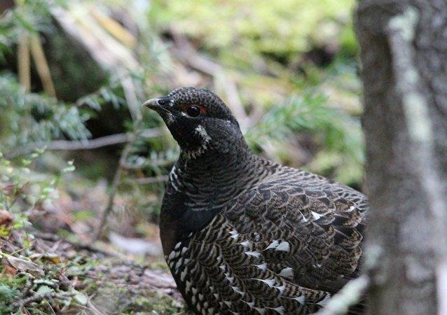 Dans les campagnes françaises, les oiseaux ne se cachent plus pour mourir