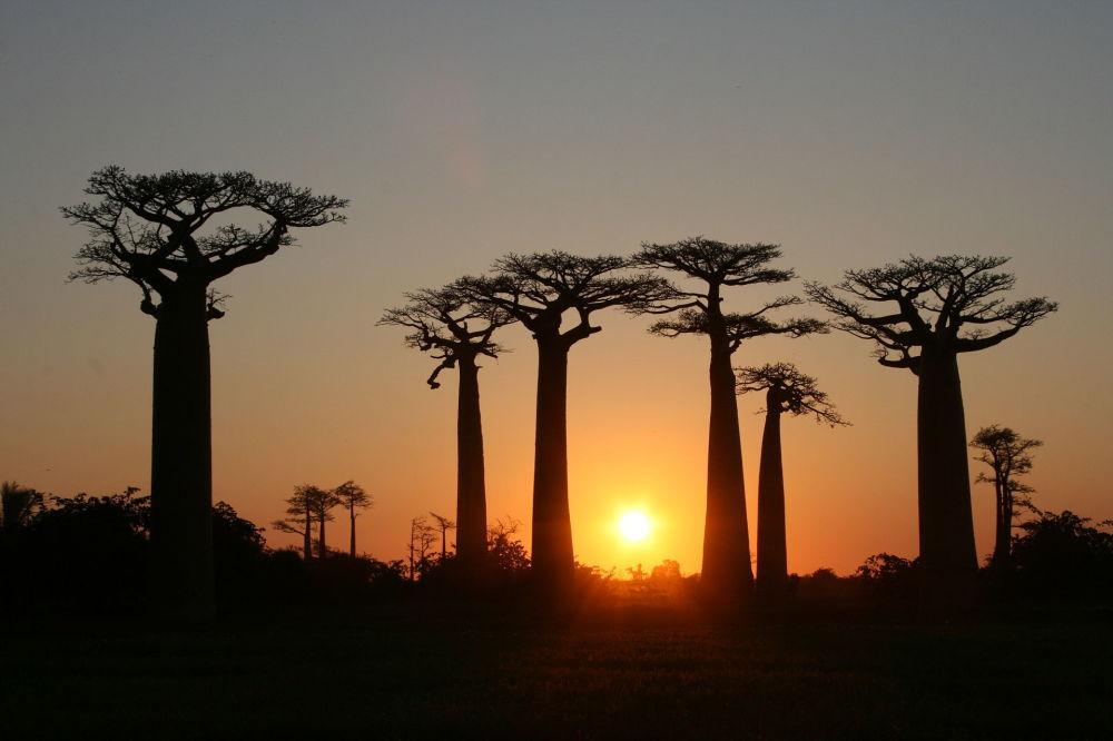 Les forêts les plus mystiques du monde