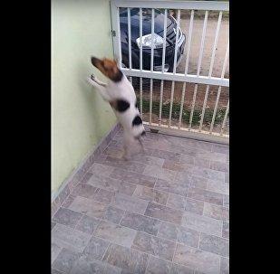 Un chien voit des éboueurs qui le rendent fou