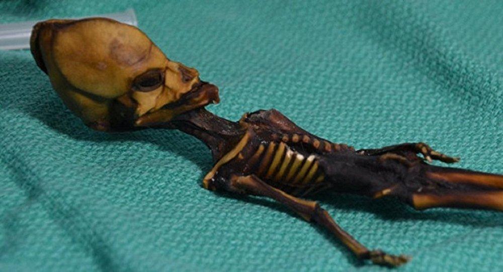 Le squelette extraterrestre retrouvé vient d'être identifié — Chili