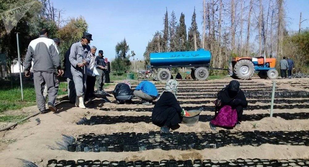 L'agriculture se relève dans la province de Deir ez-Zor