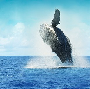 Une baleine (image d'illustration)