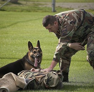 Un chien policier