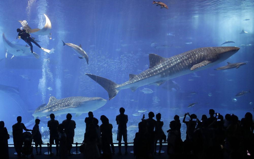 Les plus grands habitants des océans