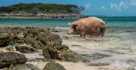 Les îles les plus insolites de la planète