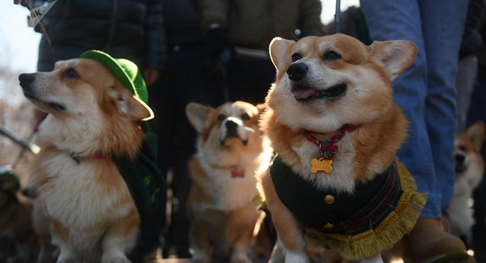 Les chiens à Moscou