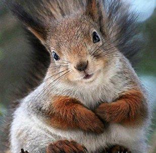 Les écureuils de Moscou